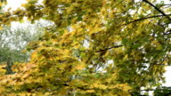 Autumn landscape with trees and leaves video