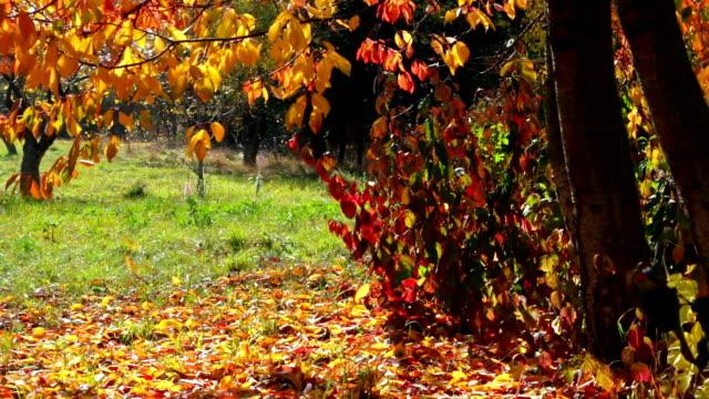 Autumn Leaf Fall video
