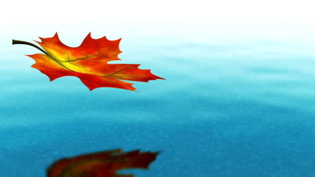 Autumn leaf falling on clear water video