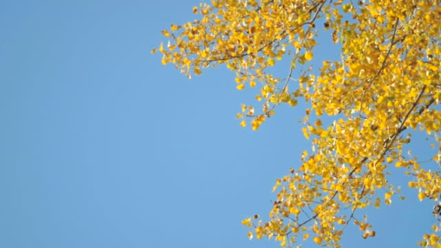 Autumn leaf video