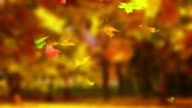 Autumn leaf with forest background video