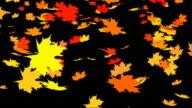 Autumn leafs falling video