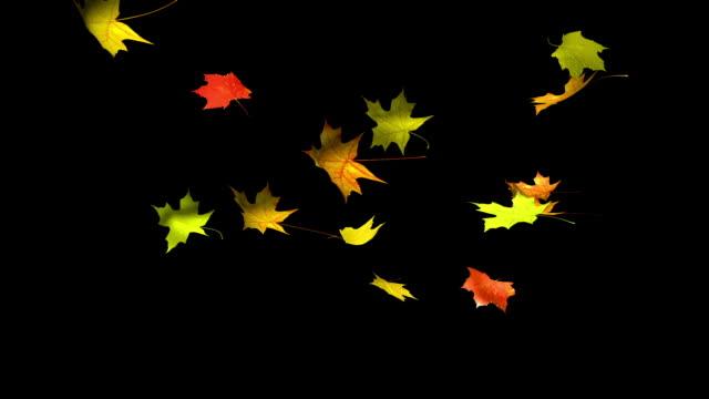 Autumn leaves. Alpha video
