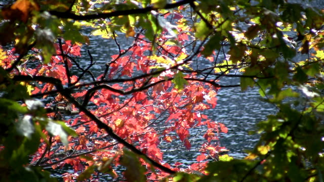 Autumn leaves and blue lake water. video