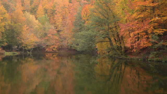 HD: Autumn Leaves and Lake video