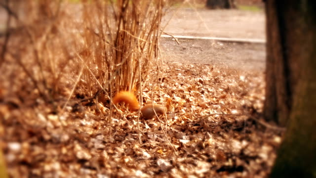 Autumn leaves bouncing between squirrel. video