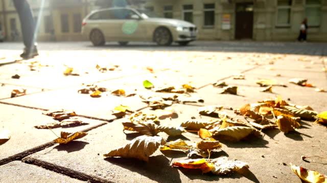 Autumn leaves cobbles nature video