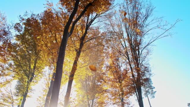 SLO MO Autumn leaves falling off trees video