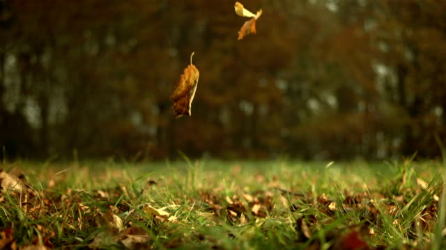 HD: Autumn Leaves Falling On Grass video