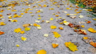 Autumn leaves falling to the ground video