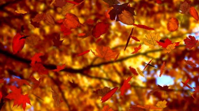 Autumn leaves falling (seamless loop) (HD 1080i) video