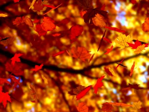 Autumn leaves falling (seamless loop) (NTSC) video