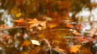 Autumn leaves floating in the water video
