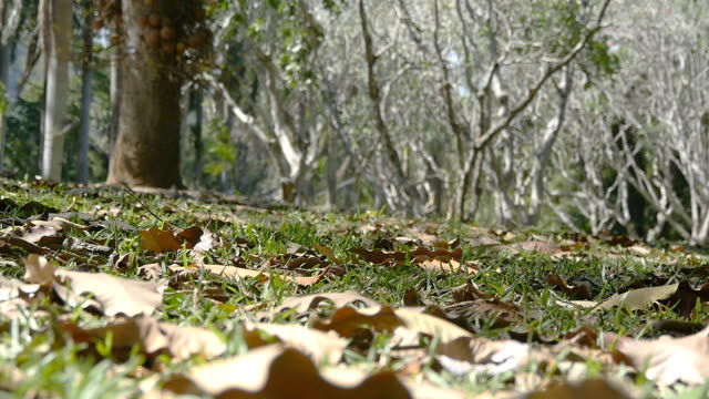 Autumn leaves, gently moving on the ground along the autumn wind in forest. Slow motion video