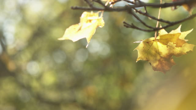 Autumn Leaves in Forest video