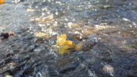 Autumn Leaves in River video