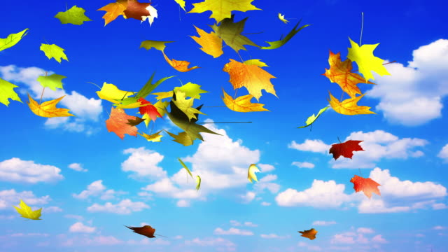Autumn leaves in the sky video