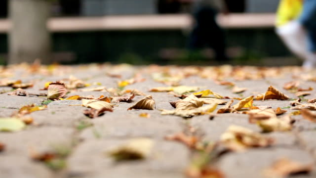 Autumn leaves on cobbles. Shooting video below video