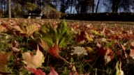 Autumn leaves on grass video