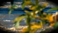 Autumn Leaves Rack Focus video