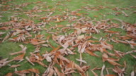 (Dolly) Autumn Leaves video