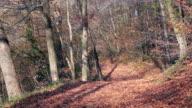 HD: Autumn Leaves video