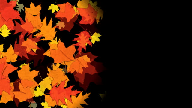 Autumn leaves video