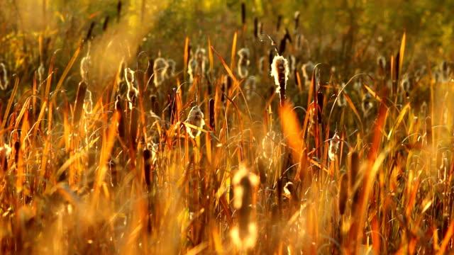 Autumn meadow video