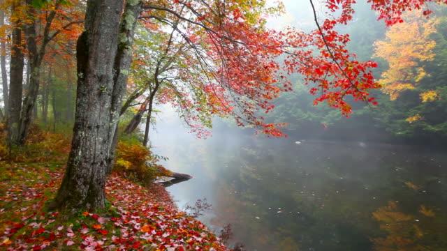Autumn Mist video