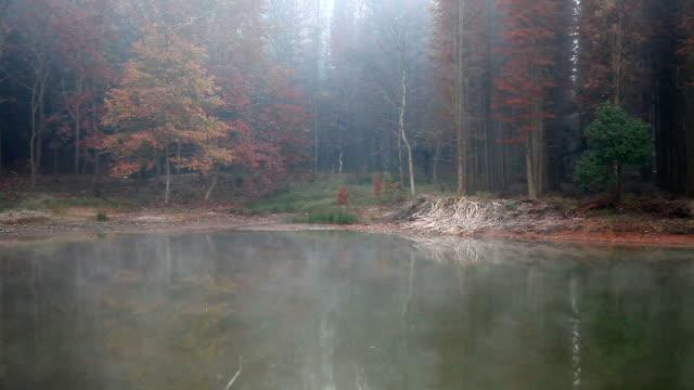 autumn morning video