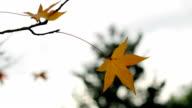 Autumn nature scene video