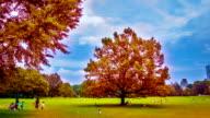 Autumn New York video