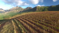 Autumn over the vineyards video