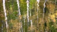 Autumn park reflection video