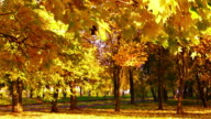 Autumn park video