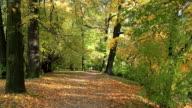 Autumn path video