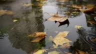 Autumn Rain - Street puddle video