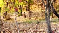 Autumn Scene video