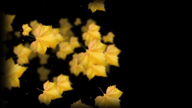 Autumn Serie video
