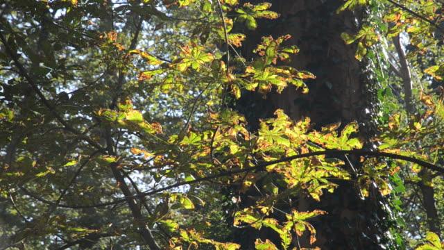 Autumn setting video