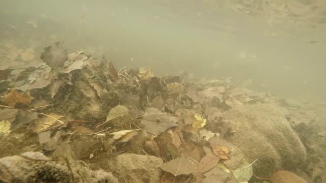 Autumn. Slow motion video