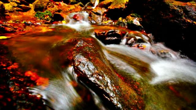 Autumn stream video