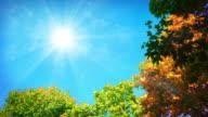 Autumn sun video
