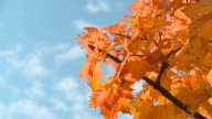 HD SLOW-MOTION: Autumn time video
