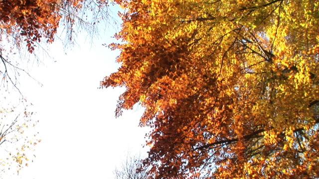 HD: Autumn time video