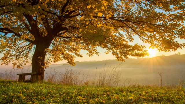 T/L Autumn tree at sunrise video
