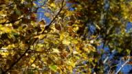 autumn trees close up video