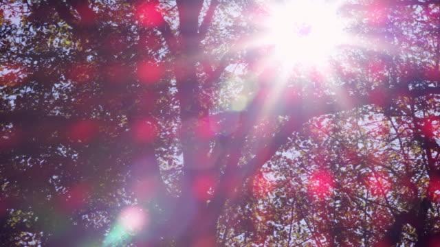 Autumn Trees video