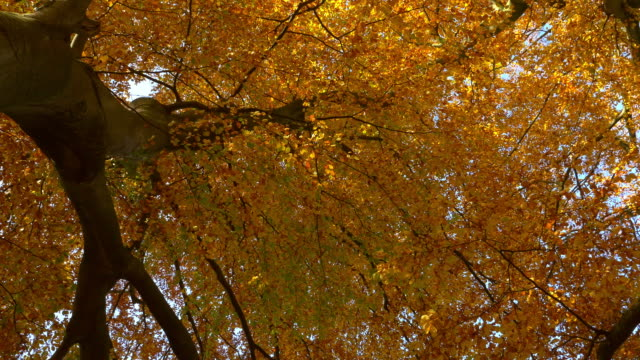 Autumn treetops in the forest video