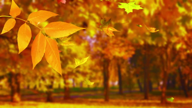 Autumn twig with grove background video